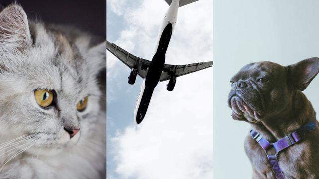 norwegian resa med djur